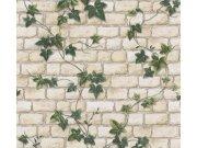 Levná papírová tapeta na zeď břečťan na zdi 9804-34 Tapety skladem