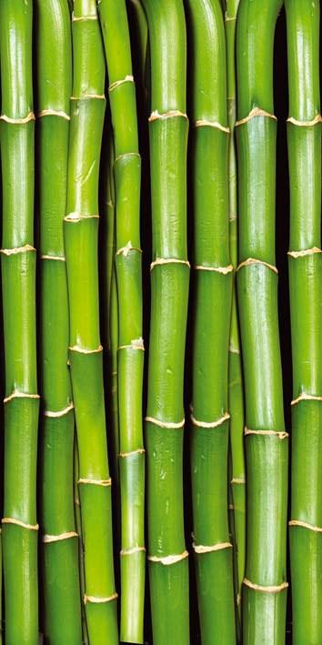 Samolepící fototapeta na dveře DL021 Bamboo, 95x210 cm - Fototapety na dveře
