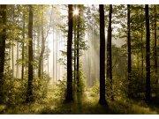 Fototapeta AG Ranní les FTNS-2447 | 360x270 cm Fototapety vliesové - Vliesové fototapety AG