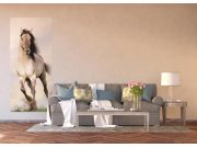 Vliesová fototapeta Cválající kůň FTNV-2928 | 90x202 cm Fototapety vliesové - Vliesové fototapety AG