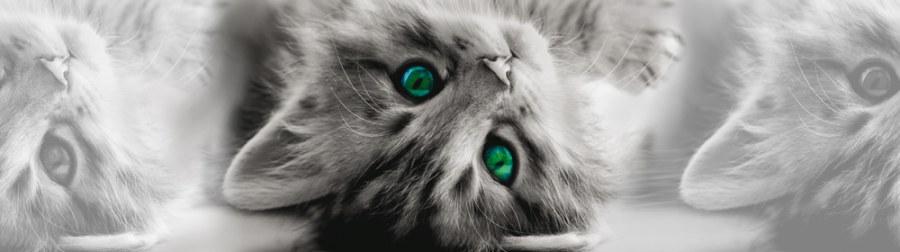 Samolepící bordura Kočka WB8217 - Samolepící bordury