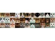 Samolepící bordura Kočky WB8232 Samolepící bordury