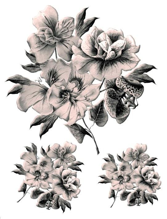 Samolepky na zeď Květiny F1063 - Samolepící dekorace na zeď