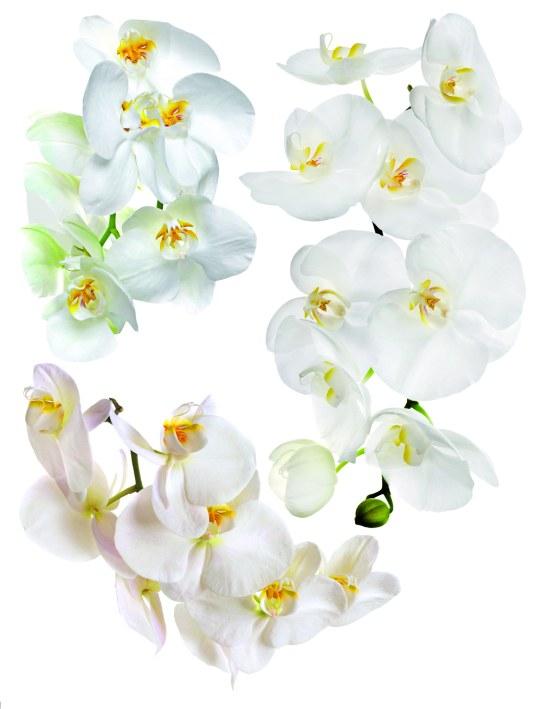 Samolepky na zeď Bílá Orchidej F1068 - Samolepící dekorace na zeď