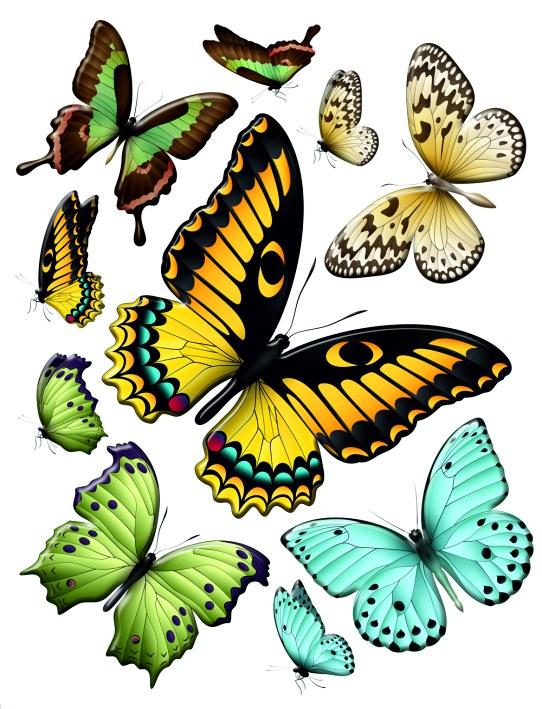 Samolepky na zeď Motýli F1069 - Samolepící dekorace na zeď