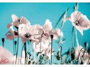 Fototapeta AG Poppies on blue FTNXXL-0118 | 360x270 cm Fototapety vliesové - Vliesové fototapety AG