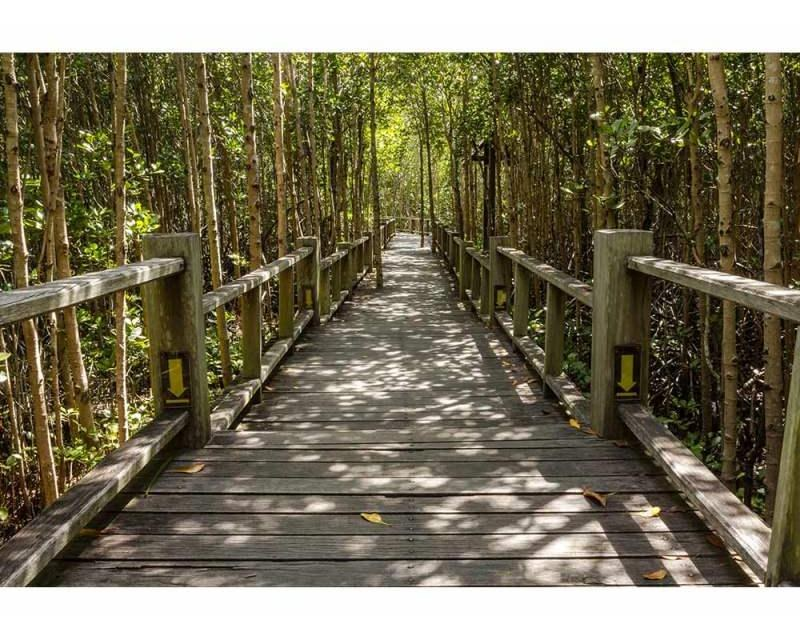 Vliesové fototapety na zeď Mangrovový les | MS-5-0059 | 375x250 cm - Fototapety vliesové