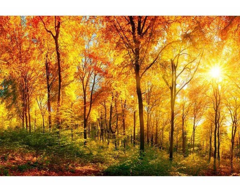 Vliesové fototapety na zeď Slunný les | MS-5-0067 | 375x250 cm - Fototapety vliesové