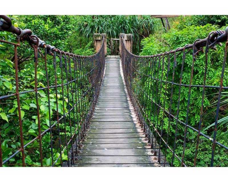 Vliesové fototapety na zeď Most v lese | MS-5-0084 | 375x250 cm - Fototapety vliesové
