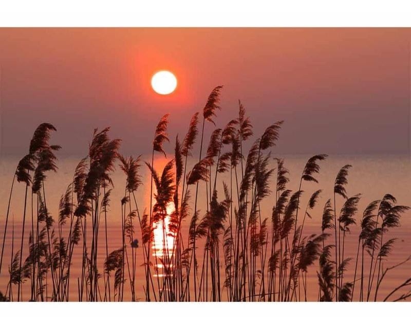 Vliesové fototapety na zeď Rákos na jezeře   MS-5-0089   375x250 cm - Fototapety vliesové