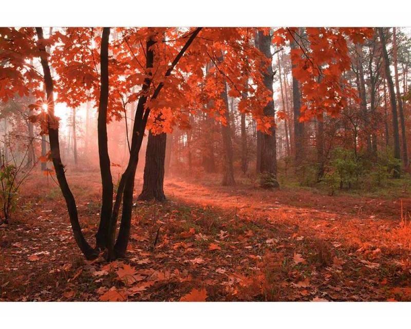 Vliesové fototapety na zeď Les v mlze | MS-5-0095 | 375x250 cm - Fototapety vliesové