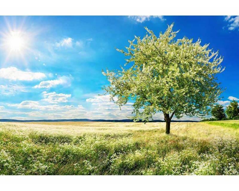 Vliesové fototapety na zeď Strom na louce | MS-5-0096 | 375x250 cm - Fototapety vliesové