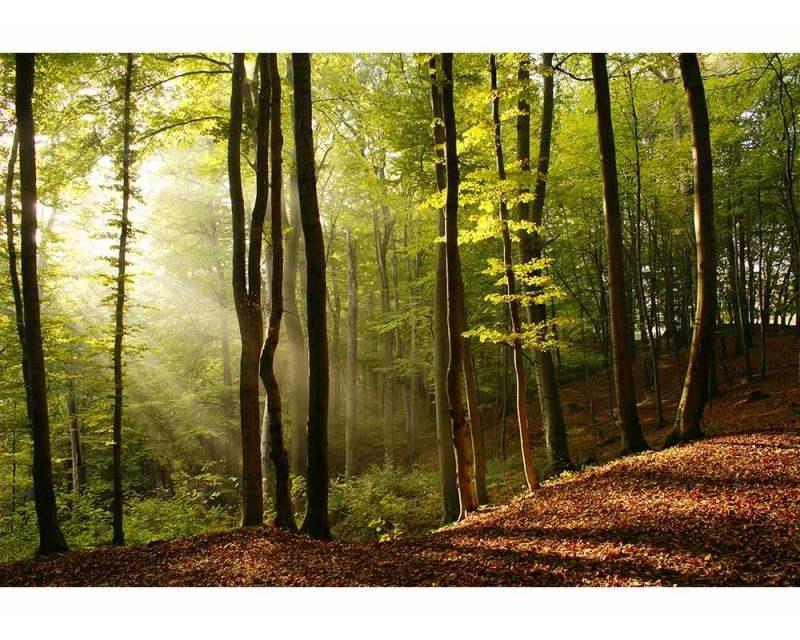 Vliesové fototapety na zeď Les | MS-5-0098 | 375x250 cm - Fototapety vliesové