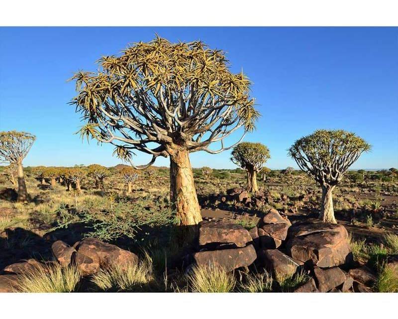 Vliesové fototapety na zeď Namibie | MS-5-0103 | 375x250 cm - Fototapety vliesové