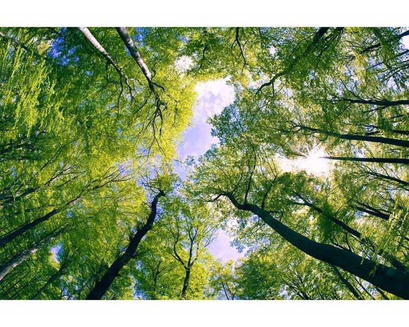 Vliesové fototapety na zeď Stromy v oblacích | MS-5-0104 | 375x250 cm - Fototapety vliesové