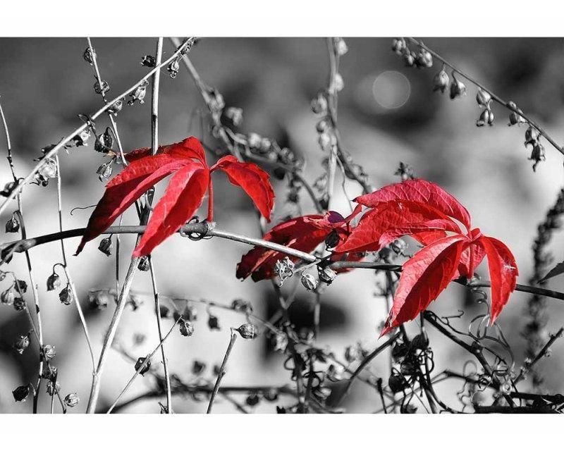 Vliesové fototapety na zeď Červené listí na černém pozadí | MS-5-0110 | 375x250 cm - Fototapety vliesové
