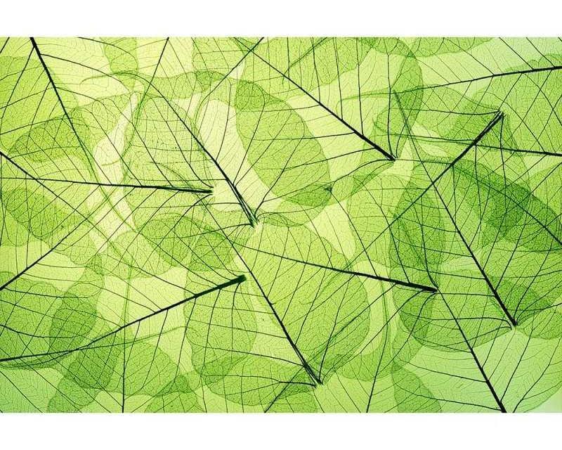 Vliesové fototapety na zeď Žilky listů | MS-5-0111 | 375x250 cm - Fototapety vliesové