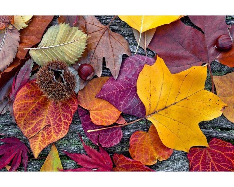 Vliesové fototapety na zeď Podzimní listí | MS-5-0112 | 375x250 cm - Fototapety vliesové