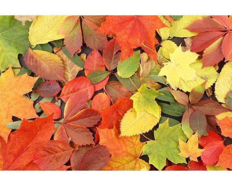 Vliesové fototapety na zeď Pestrobarevné listí | MS-5-0115 | 375x250 cm - Fototapety vliesové