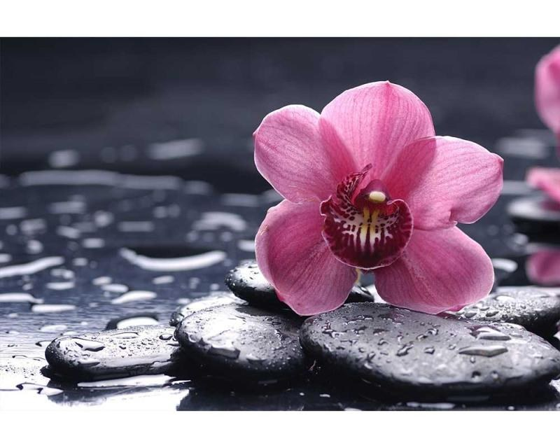 Vliesové fototapety na zeď Orchidej | MS-5-0120 | 375x250 cm - Fototapety vliesové