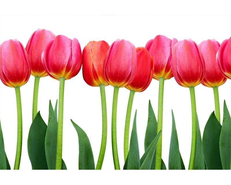 Vliesové fototapety na zeď Tulipány | MS-5-0126 | 375x250 cm - Fototapety vliesové