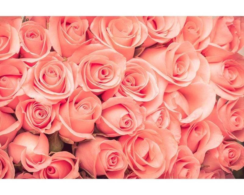 Vliesové fototapety na zeď Růže | MS-5-0133 | 375x250 cm - Fototapety vliesové