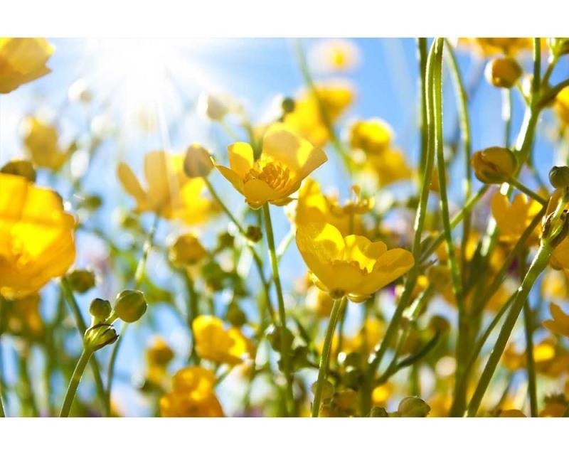 Vliesové fototapety na zeď Žluté květiny | MS-5-0134 | 375x250 cm - Fototapety vliesové