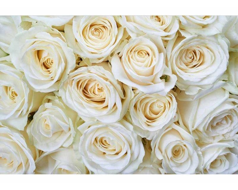 Vliesové fototapety na zeď Bílé růže | MS-5-0137 | 375x250 cm - Fototapety vliesové