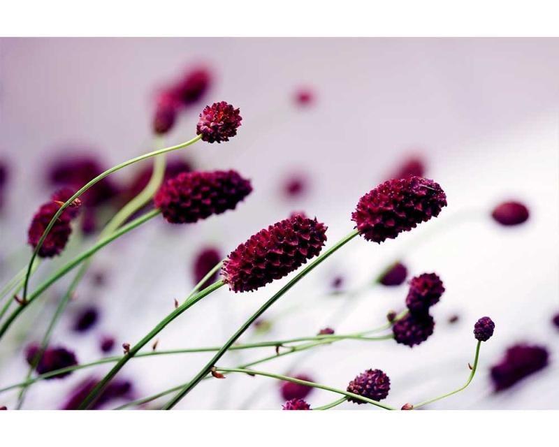 Vliesové fototapety na zeď Fialová květina | MS-5-0141 | 375x250 cm - Fototapety vliesové