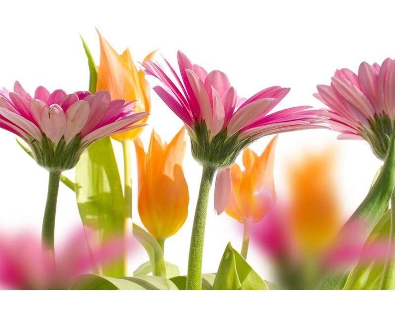 Vliesové fototapety na zeď Jarní květiny | MS-5-0142 | 375x250 cm - Fototapety vliesové