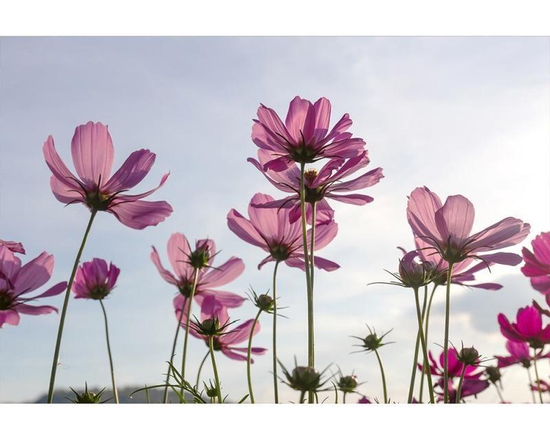 Vliesové fototapety na zeď Květiny | MS-5-0145 | 375x250 cm - Fototapety vliesové