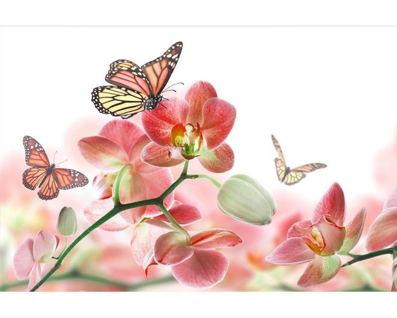 Vliesové fototapety na zeď Motýli a orchideje | MS-5-0146 | 375x250 cm - Fototapety vliesové