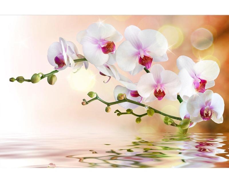 Vliesové fototapety na zeď Bílá orchidej | MS-5-0147 | 375x250 cm - Fototapety vliesové