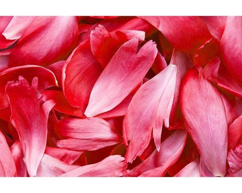 Vliesové fototapety na zeď Červené ikvětní lístky | MS-5-0151 | 375x250 cm - Fototapety vliesové