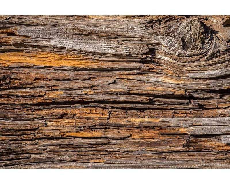 Vliesové fototapety na zeď Kůra stromu | MS-5-0159 | 375x250 cm - Fototapety vliesové