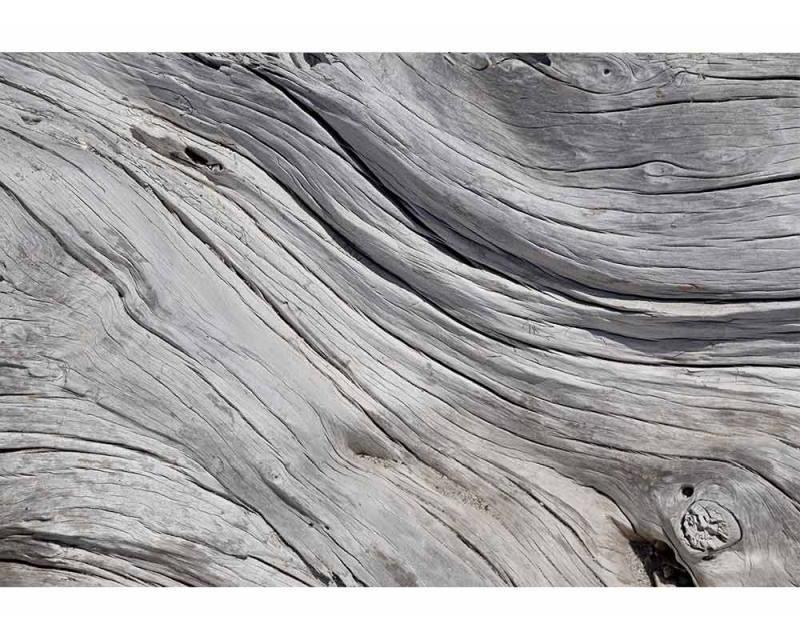 Vliesové fototapety na zeď Struktura stromu | MS-5-0160 | 375x250 cm - Fototapety vliesové