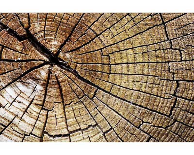 Vliesové fototapety na zeď Letokruhy | MS-5-0162 | 375x250 cm - Fototapety vliesové