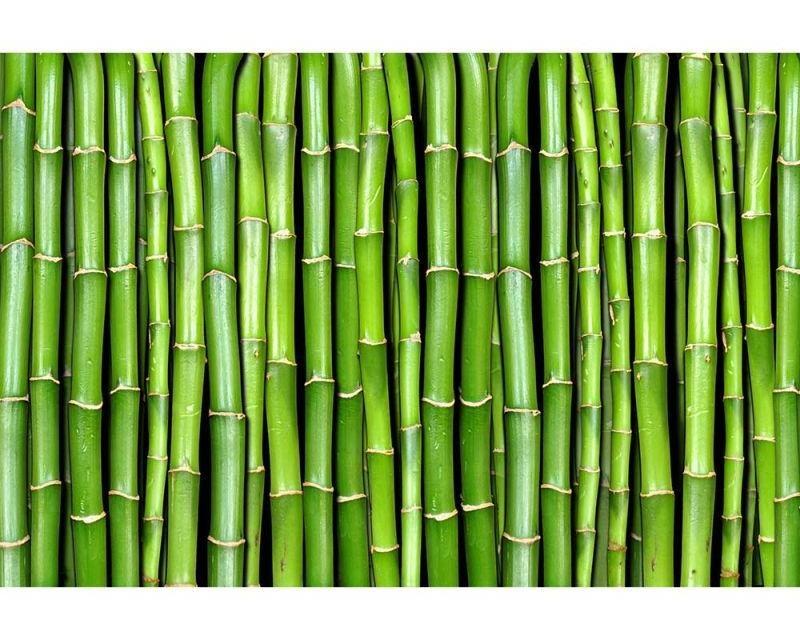 Vliesové fototapety na zeď Bambus | MS-5-0165 | 375x250 cm - Fototapety vliesové