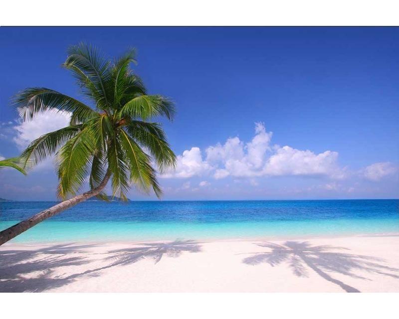 Vliesové fototapety na zeď Pláž s palmou | MS-5-0194 | 375x250 cm - Fototapety vliesové