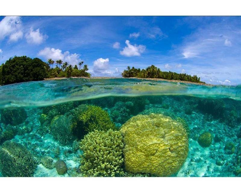 Vliesové fototapety na zeď Korálový útes | MS-5-0200 | 375x250 cm - Fototapety vliesové