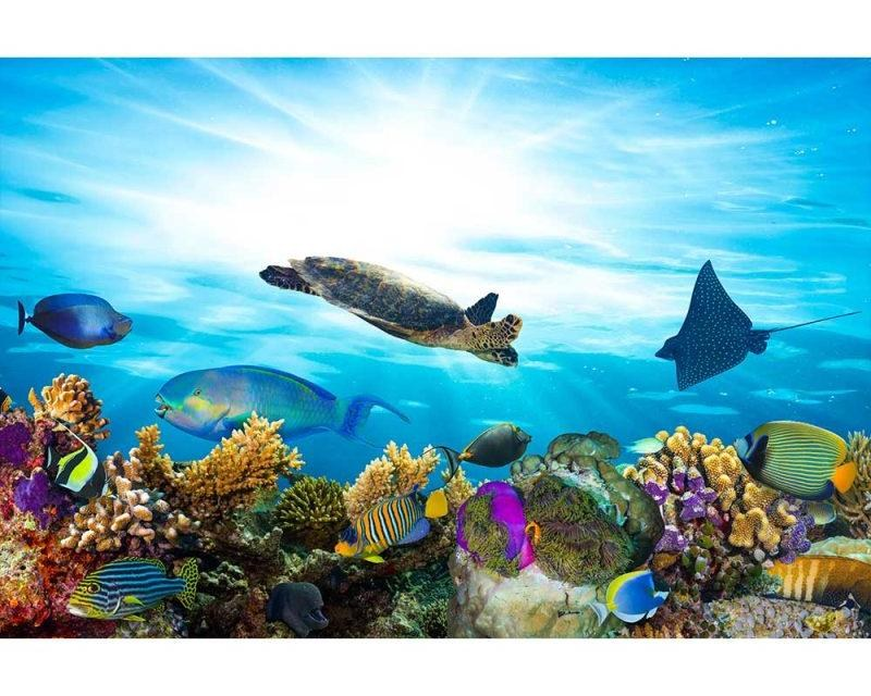 Vliesové fototapety na zeď Ryby v oceánu | MS-5-0216 | 375x250 cm - Fototapety vliesové