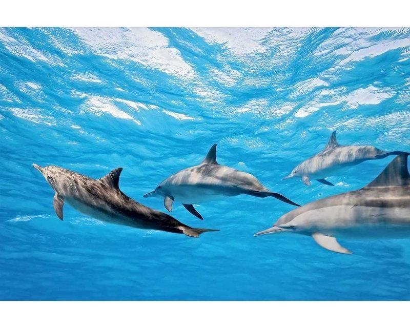 Vliesové fototapety na zeď Delfíni | MS-5-0218 | 375x250 cm - Fototapety vliesové