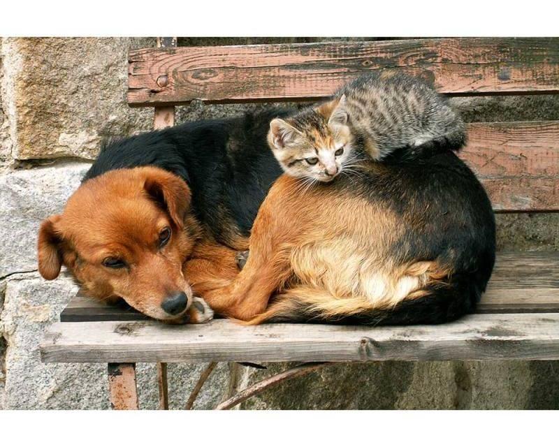 Vliesové fototapety na zeď Kočka a pes | MS-5-0221 | 375x250 cm - Fototapety vliesové