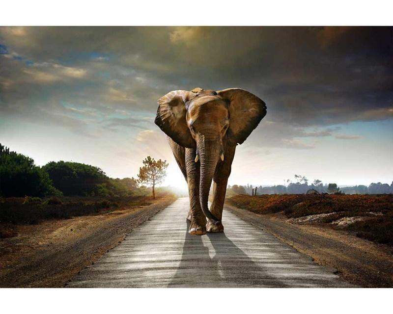 Vliesové fototapety na zeď Kráčející slon | MS-5-0225 | 375x250 cm - Fototapety vliesové