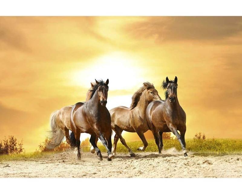 Vliesové fototapety na zeď Koně při západu slunce | MS-5-0227 | 375x250 cm - Fototapety vliesové