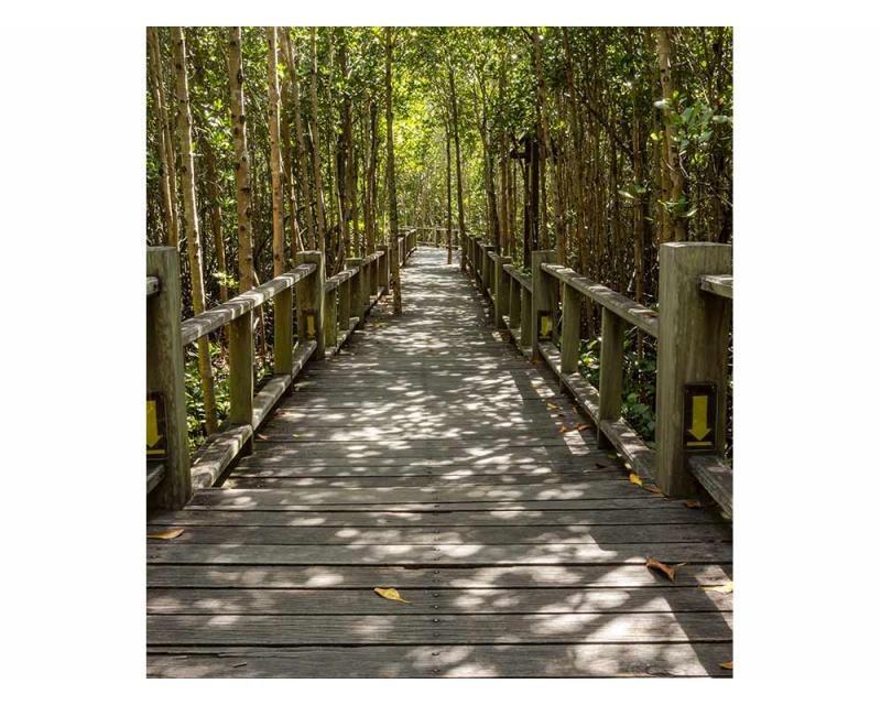 Vliesové fototapety na zeď Mangrovový les | MS-3-0059 | 225x250 cm - Fototapety vliesové