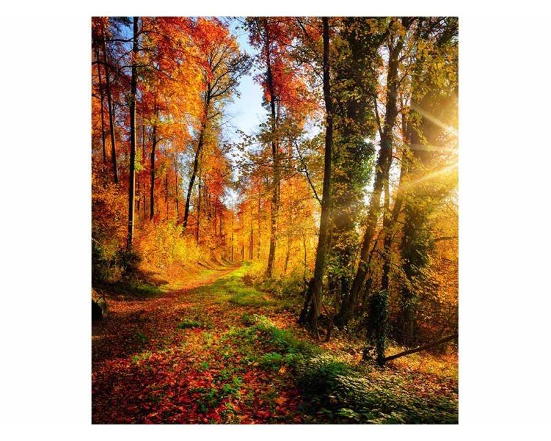 Vliesové fototapety na zeď Procházka lesem | MS-3-0065 | 225x250 cm - Fototapety vliesové