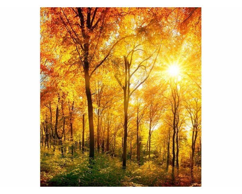 Vliesové fototapety na zeď Slunečný les | MS-3-0067 | 225x250 cm - Fototapety vliesové