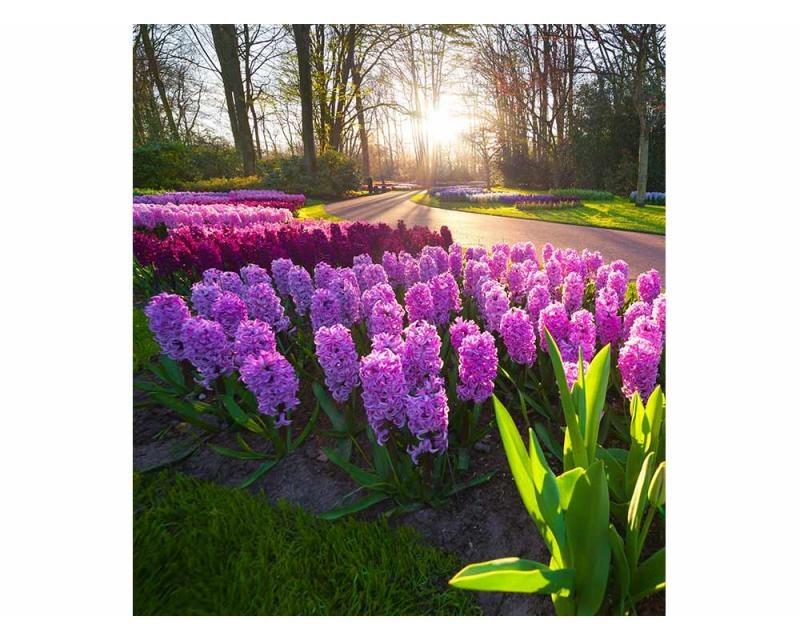 Vliesové fototapety na zeď Květiny hyacintu | MS-3-0068 | 225x250 cm - Fototapety vliesové