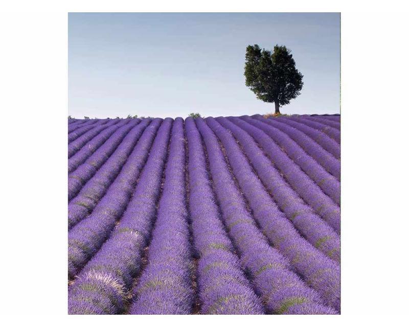 Vliesové fototapety na zeď Levandulové pole | MS-3-0088 | 225x250 cm - Fototapety vliesové